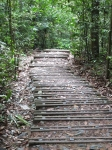 Bukit Timah Nature Reserve in Singapore