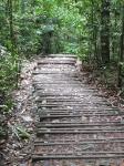 Bukit Timah Nature Reserve in Singapore