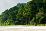 андаманские джунгли
