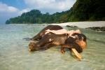купание со слоном на острове Хэвлок
