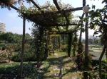 парк-розарий Сервантеса