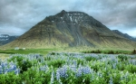 Valley of Flowers National Park in India