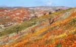 Национальный парк Долина Цветов