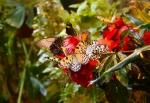 бабочки в саду Миндо