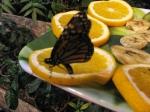 бабочка на дольках апельсина в саду Миндо