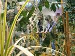 растения в саду Миндо