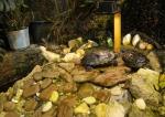 черепахи в саду Миндо