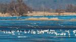 птицы в Нацпарке Нижняя Долина Одера