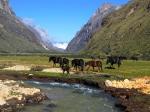 Huascaran NP, Cordillera Blanca, Peru