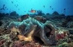 риф Дигалихаа, Мальдивы