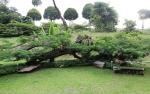 Сад пряностей в парке Форт Каннинг