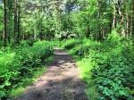 Пискаревский лесопарк в Санкт-Петербурге, Россия