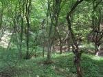 лес Хойя-Бачу в Румынии