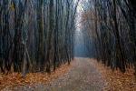 лес Хойя-Бачу осенью