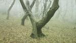 лес Хойя-Бачу