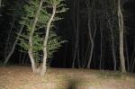 лес Хойя-Бачу ночью
