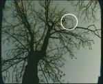 огонек на фотоснимке леса Хойя-Бачу