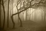 лес Хойя-Бачу, Румыния