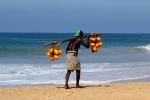 житель Хиккадувы несет кокосы