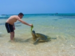 турист кормит черепаху ламинарией