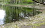 парк Серебряный пруд в Санкт-Петербурге, Россия