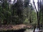 заказник Черустинский лес