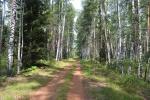 комплексный заказник Черустинский лес