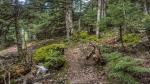дремучий лес Парнита