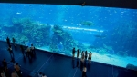 аквариум в Барселоне