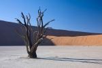 Мертвое болото в Намибии