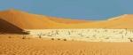Мертвый лес, Намибия
