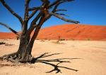 Мертвое болото, Намибия
