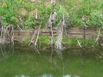 остатки плотины на Сухонке