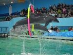 дельфинарий Санкт-Петербурга