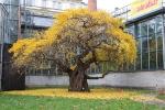 Ботанический сад Карлового Университета
