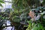 Ботанический сад Карлового Университета, Прага