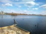 кормушка для уток и чаек на озере Киово