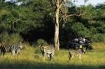 сафари в заповеднике ЮАР