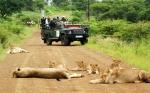 фото-охота в заповеднике ЮАР