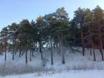 зима в Карагайском боре