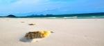 Whitehaven Beach in Queensland, Australia