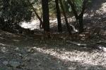 заповедник муфлонов, Кипр