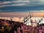 цветы-эндемики на склонах вулкана Тейде