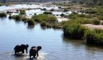 слоны на водопое в Нацпарке Крюгера