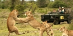 сафари в Нацпарке Крюгера, ЮАР
