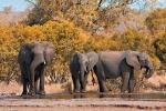 слоны в Нацпарке Крюгера
