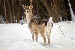 Часть Ржевского лесопарка в Санкт-Петербурге станет зоопарком