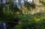 Охтинский лесопарк