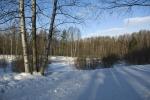 Ржевский лесопарк зимой
