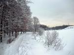 зима в Ржевском лесопарке